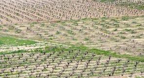 Vineyards, Paphos, Cyprus Stock Photo