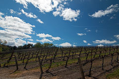 Vineyards in Paso Robles Wine Country Scenery Stock Photography
