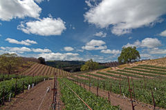 Vineyards in Paso Robles Wine Country Scenery Royalty Free Stock Images