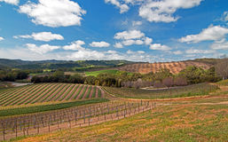 Vineyards in Paso Robles Wine Country Scenery Stock Images