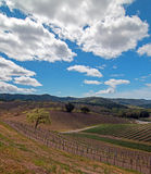 Vineyards in Paso Robles Wine Country Scenery Stock Photos