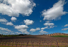 Vineyards in Paso Robles Wine Country Scenery Stock Image