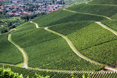 Vineyards. Pathways over terraced vineyards in Durbach, Germany Royalty Free Stock Images