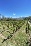 Vineyards in Payogasta in Salta, Argentina. stock images