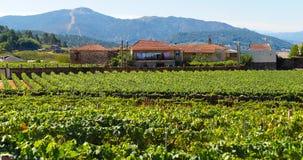 Vineyards in Pazos Hermos. Ribeiro Country in Galicia - Northwest of Spain Royalty Free Stock Photo