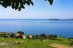 Vineyards Peljesac, Dalmatia royalty free stock images