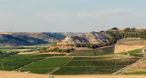Vineyards in Penafiel. Fields of vineyards in Penafiel, Ribera del Duero, Valladolid, Spain Stock Photo