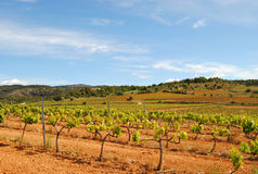 Vineyards of Penedes Catalonia stock photo