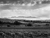 Vineyards in the penedes, Catalonia. To the bottom mountain of Monserrat. Pic in black and white royalty free stock photography