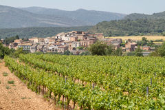 Vineyards with picturesque village at background. Vineyards in spring with picturesque village at background, Catalonia, Spain stock photography