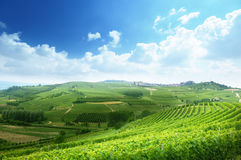 Vineyards in Piedmont Stock Photo