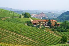 Vineyards in Piemont overlooking the town of Barolo Stock Images
