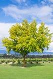 Vineyards plantation of grapes stock photos