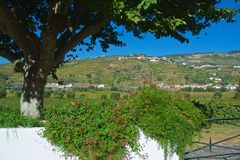 Vineyards for Port wine production in Douro Valley in Portugal royalty free stock images