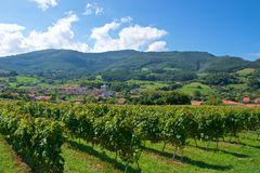 Vineyards for Port wine production in Douro Valley in Portugal royalty free stock photos
