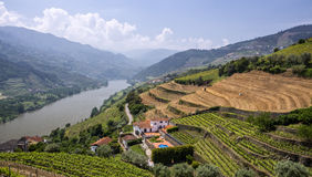 Vineyards, Portugal. Rolling vineyard hills along the river Douro valley, Portugal Stock Photo