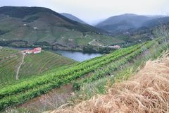 Vineyards in Portugal. Portugal wine region - vineyards on hills along Douro river valley. Alto Douro DOC stock image