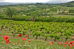 The Vineyards of Provence Stock Photography