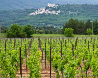 The Vineyards of Provence Stock Image