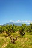 Vineyards Provence Stock Photography