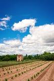Vineyards Provence Stock Image