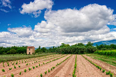 Vineyards Provence Stock Images
