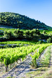 Vineyards, Provence, France Stock Image