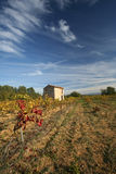 Vineyards, Provence, France. An abandoned stone shack sits in the middle of vineyards near Roussillion in the Provence region of France Stock Images
