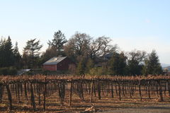 Vineyards with Red Barn Stock Photo