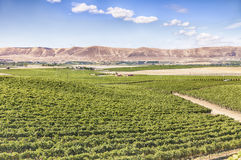 Vineyards On Red Mountain Stock Image
