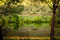 Vineyards reflecting in the moselle river Stock Photo