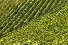 Vineyards, regular patterns. Black Forest, Germany. Vineyards, regular patterns in the Black Forest, Germany royalty free stock photography