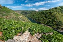 Vineyards of Ribeira Sacra in Galicia, Spain Royalty Free Stock Photo