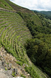 Vineyards of Ribeira Sacra Royalty Free Stock Photos