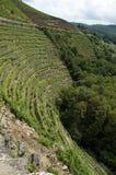 Vineyards of Ribeira Sacra Royalty Free Stock Photos