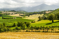 Vineyards between Rieti and Terni Royalty Free Stock Photography