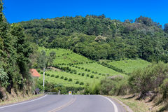 Vineyards in Rio Grande do Sul Stock Photos