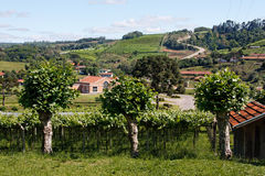 Vineyards in Rio Grande do Sul Royalty Free Stock Photography