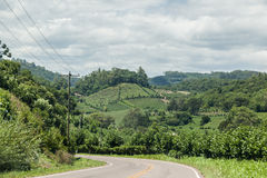 Vineyards in Rio Grande do Sul Royalty Free Stock Images