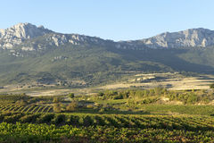 Vineyards of Rioja. Located in Laguardia, Rioja Alavesa, Basque Country, Spain. In the background is located `Sierra Cantabria`. Summer royalty free stock photo