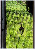 Vineyards in Riquewihr, Alsace, France Royalty Free Stock Image