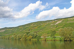 Vineyards at the River Mosel in Germany Stock Image