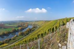 Vineyards at the river Neckar, Germany Stock Image