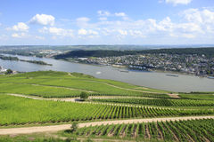 Vineyards River Rhine. Vineyards on the River Rhine Valley Germany Royalty Free Stock Photo