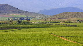 Vineyards. Road through the vineyards near Robertson - South Africa Royalty Free Stock Photography
