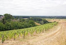 Vineyards, Rochefort sur Loire (Loire Valley, France) Stock Photography