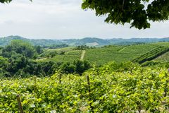 Vineyards in the Roero, Piedmont - Italy. Overview of the vineyards in the Roero near Monticello d`Alba, Piedmont - Italy Royalty Free Stock Photo