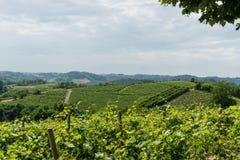 Vineyards in the Roero, Piedmont - Italy. Overview of the vineyards in the Roero near Monticello d`Alba, Piedmont - Italy Stock Photos