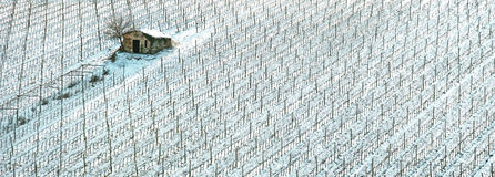 Vineyards rows covered by snow in winter. Chianti, Florence, Ita Stock Photos