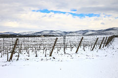 Vineyards rows covered by snow in winter. Chianti, Florence, Ita Royalty Free Stock Photography